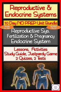 Reproductive System  U0026 Endocrine System  10 Day No Prep