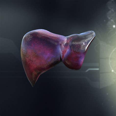 Human Liver Anatomy 3d Model Max Obj 3ds Fbx C4d Lwo Lw