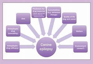Update On Canine Epilepsy  Treatment Advancements