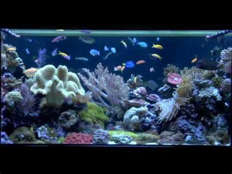 Okeanos Aquascaping by Custom Coral Reef Aquarium Okeanos Aquascaping