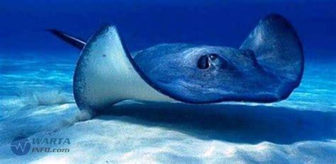 7 hewan laut beracun paling berbahaya dan mematikan