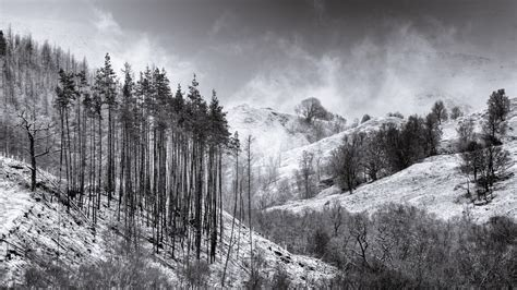 Awesome วอลเปเปอร์ หิมะ, ฤดูหนาว, ธรรมชาติ, ดำและขาว, ถิ่น ...