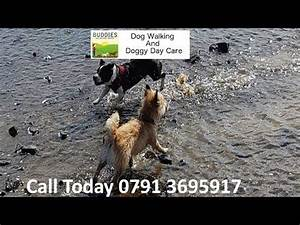 buddies dog walking and doggy day care services wakefield With dog walking services near me