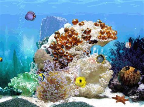 fond ecran aquarium anime gratuit fond 233 cran pc anim 233 e gratuit fonds d 233 cran anim 233 s projets 224 essayer