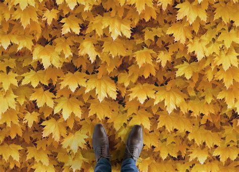 autumn leaf vinyl flooring atrafloor