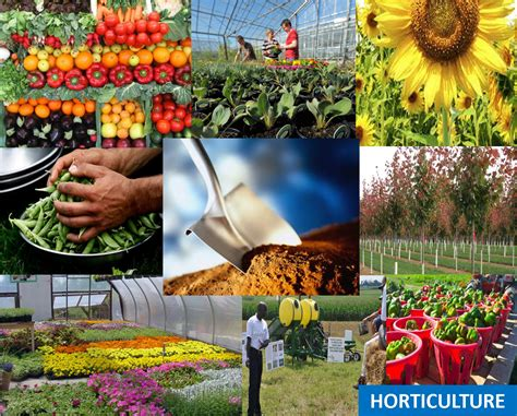 what is horticultural horticulture boyle county