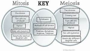 Mitosis vs meiosis venn diagram answers imagemart mitosis meiosis venn diagram comparison mitosis and meiosis valvehomeus diagram mitosis meiosis gallery how to guide and refrence ccuart Images