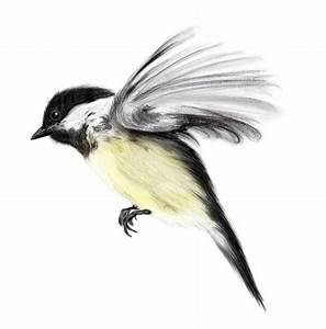 flying chickadee   animal portrait   Pinterest