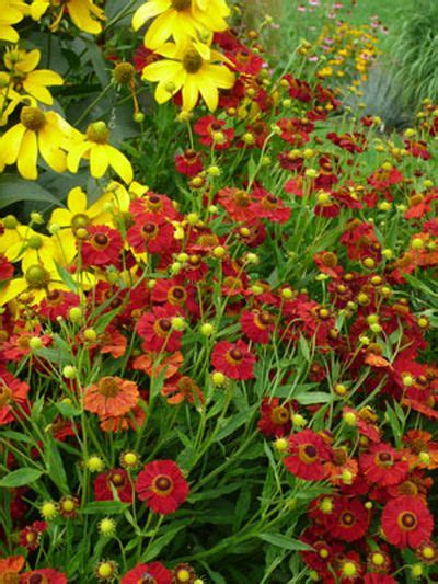 late summer flowers late summer flowers gardener s supply
