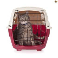 getting your cat to accept a cat carrier pets4homes