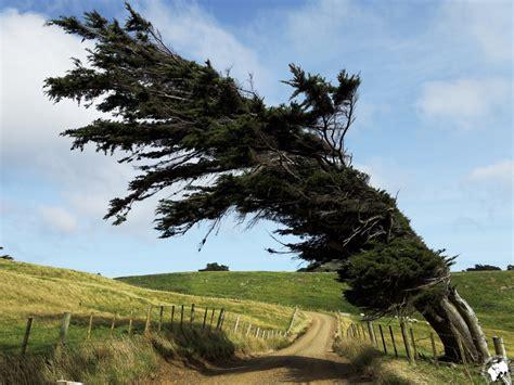 arbres dangereux suite  la tempete ville de naujac sur mer