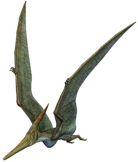 Rettili Volanti Preistorici Informazioni Pterosauri E Pterodattili I Dinosauri Volanti