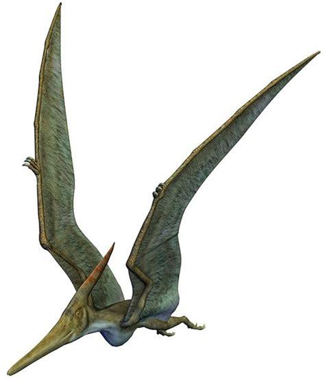 Informazioni Pterosauri e Pterodattili: i dinosauri volanti