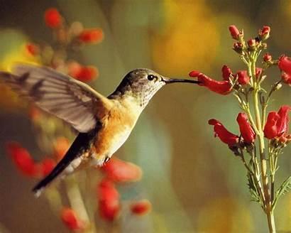 Birds Wallpapers Desktop Background Colorful Hummingbird Hummingbirds