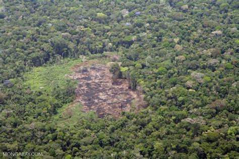 plane view  deforestation   amazon