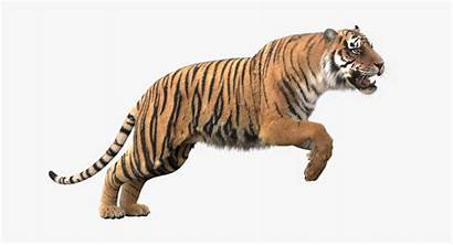 Tiger 3d Animation Realistic Fur Turbosquid