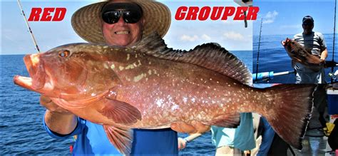 florida grouper targeting central hubbard dylan gets even action young into