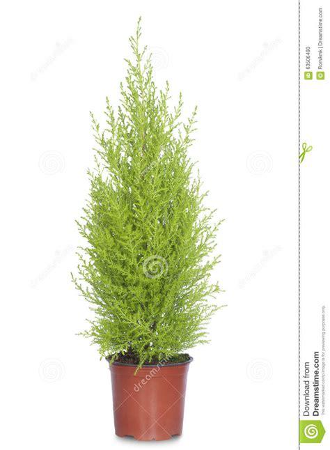 arbre de sapin d 233 coratif dans un pot de fleurs photo stock image 63506480
