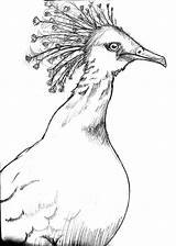 Pigeon Crowned Victoria Coloring Designlooter sketch template