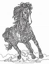 Coloring Adult Horse sketch template