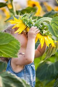 Kids Gardening Projects  How To Create A Sunflower House