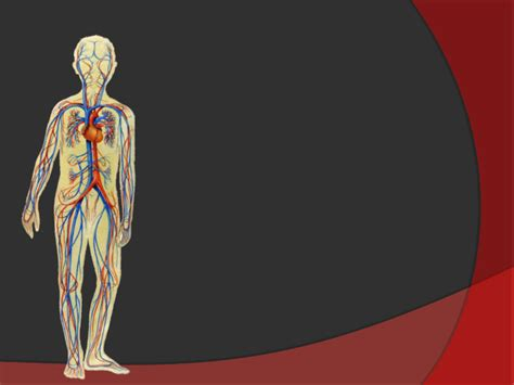 Кръвоносна система, кръвообръщение, Презентация по Човекът ...