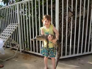 Alligator Alley Florida