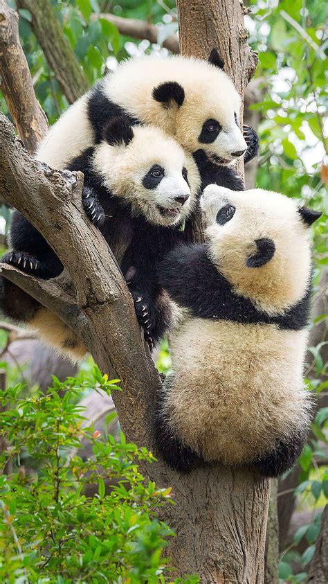 grosser panda wwf junior