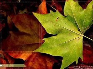 fond d39ecran feuilles mortes With forum plan de maison 13 fond decran feuilles dautomne