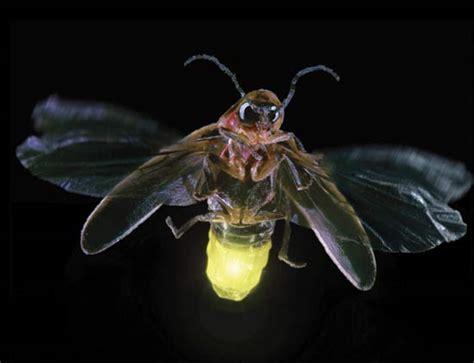 light up bug bugs