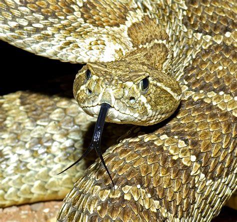 Creepy Snakes You May Encounter in Colorado