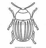 Outline Beetle Bug Icon Potato Insect Nature Wildlife Colorado Illustration Line Bugs Iconfinder sketch template