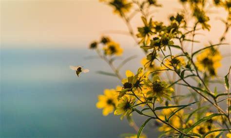 wild bees   honey beeshow  yard  support