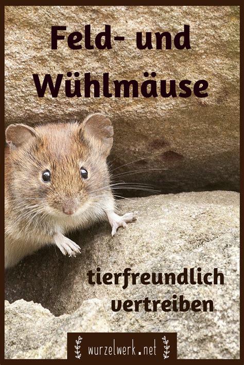 Carbid Gegen W Hlm Use 1472 by Mittel Gegen Maulwurf Mittel Gegen Maulwrfe Maulwurf