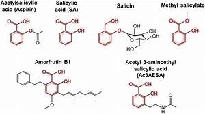 How Does Aspirin Work In Plants And Humans   U00b7 Frontiers
