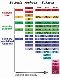 1  Comparison Of Rna Polymerase Composition In Bacteria