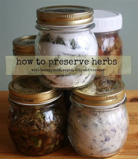 healthy green kitchen how to preserve herbs healthy green kitchen this 1597