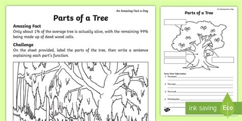 parts   tree worksheet activity sheet amazing fact