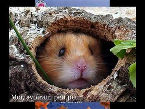 Animaux Drole Image Humour D Animaux