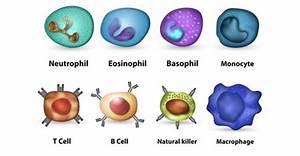 Killer Flu  U2013 How To Boost Immunity   U2013 350