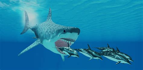 Megalodon Images Megalodon Shark Hd Photos