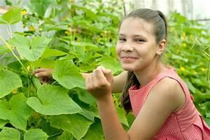 Aprikosenbaum Selber Ziehen : gurken selber ziehen vom samen zur pflanze ~ Lizthompson.info Haus und Dekorationen