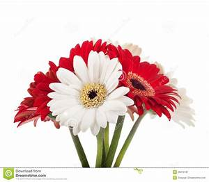White And Red Flowers, Bouquet Royalty Free Stock ...