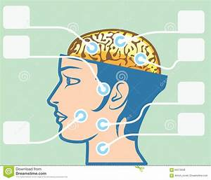 Brain And Head Functions Diagram Stock Vector