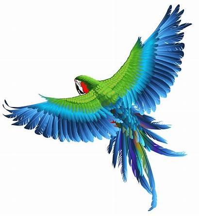 Parrot Transparent Bird Birds Clipart Flying Photoshop