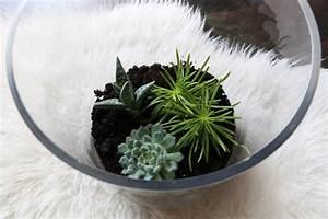 Sukkulenten Im Glas Pflanzen : pflanzen im glas interesting pflanze im glas with pflanzen im glas fabulous dekorative gelbe ~ Eleganceandgraceweddings.com Haus und Dekorationen