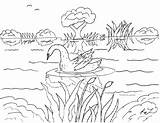 Swans sketch template