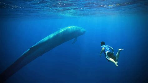 Blue Whale Watching Holidays & Expeditions