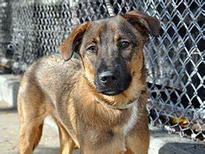How New Yorkers Can Help Animal Care & Control of NYC