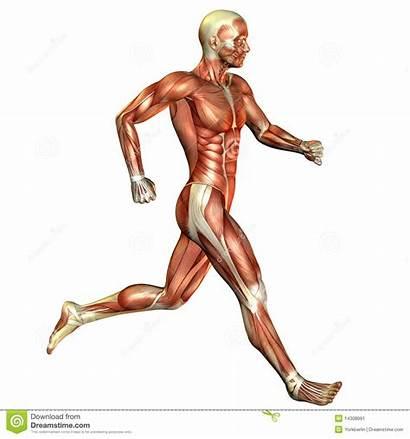 Muscle Running Clipart Movement Human Clip Clipartpanda
